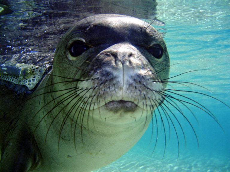 Fokarium w Łebie - foka